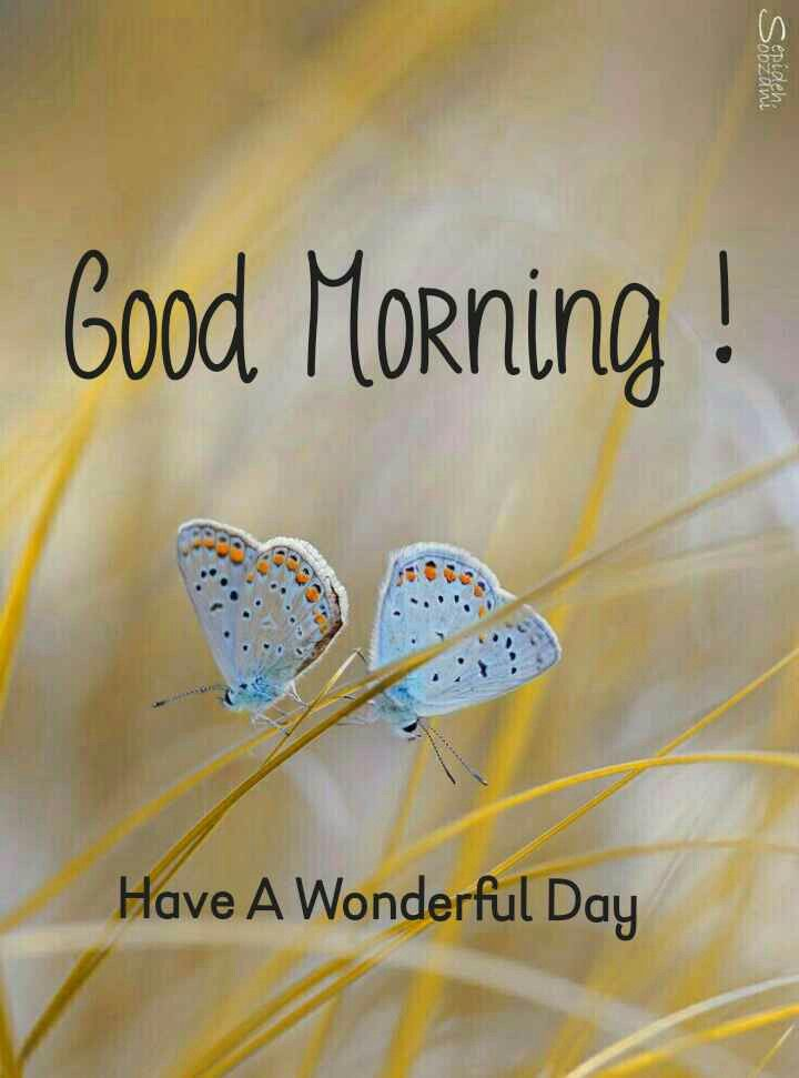 Good Morning For Love Good Morning Monday Images Good Morning Meme Good Morning Love