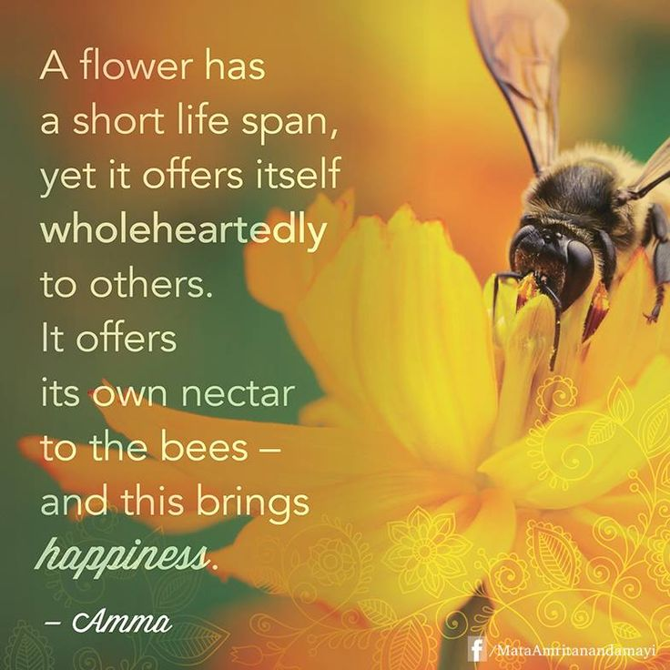 """""""A flower has a short life span, yet it offers itself wholeheartedly to others. It offers its own nectar to the bees -- and this brings happiness."""" - Amma (Mata Amritanandamayi)"""