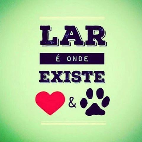 EXATAMENTE! ❤️❤️ #cachorro  #amoanimais  #filhode4patas  #carinho  #amocachorro  #gato  #amogatos  #gatofofo  #gatofolgado