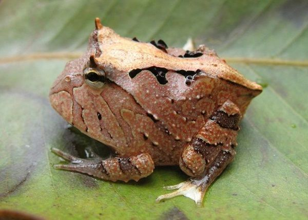 Different type of frogs (5)