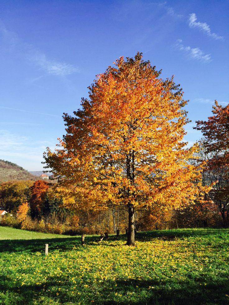 Herbstfarben in Jena