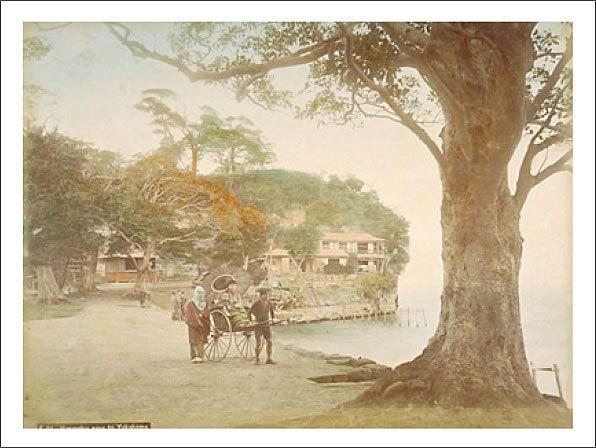 本牧の海岸 人力車と大木
