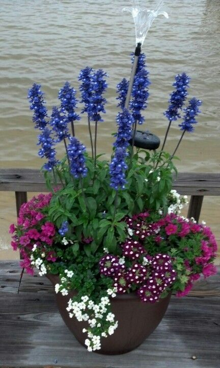 Great Container garden with a hardy sun loving group of plants that are easy to grow: Salvia Blue Victoria, Bacopa, Verbena, Superbells Cherry Red by letitia