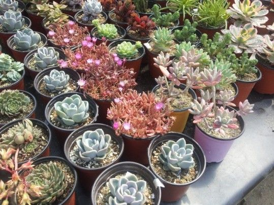 645 best beautiful succulents cactus images on pinterest for How to keep succulents alive indoors