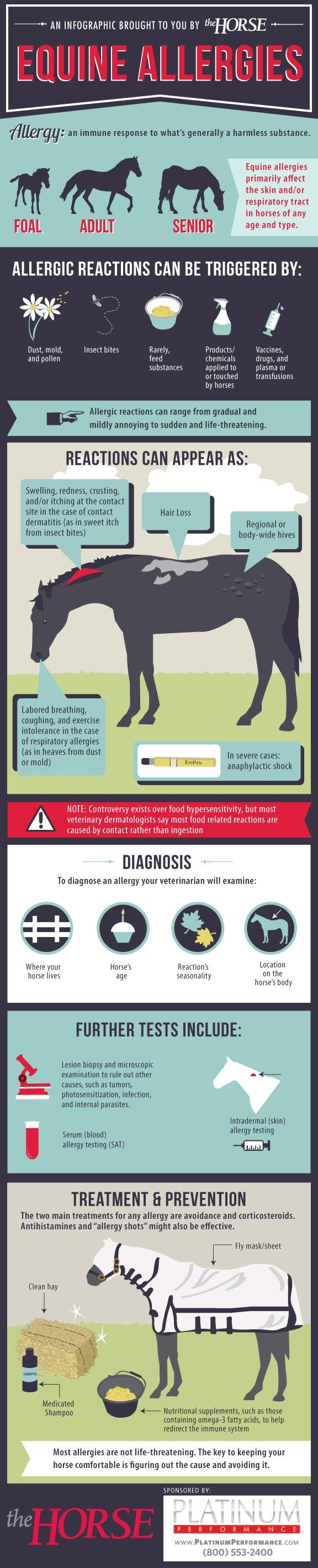 Infographic: Equine Allergies *Equine health posters on the walls. If I training up the teach HR could be a little weekend money in.