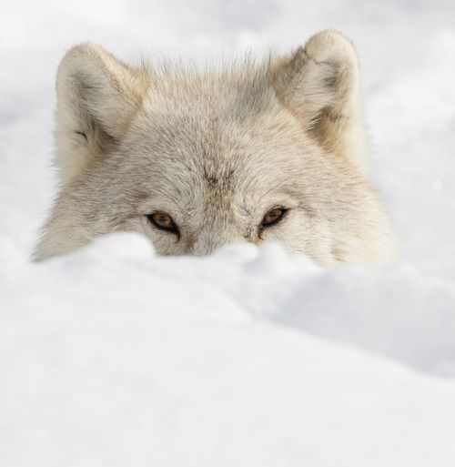 Sneaky look by © Dominic Marcoux | The Beauty of Wildlife | Bloglovin'