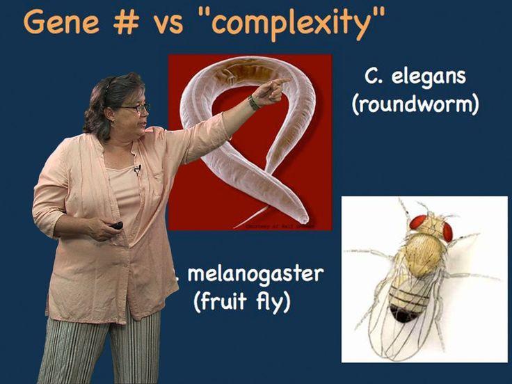 Melissa Moore (U. Mass/HHMI) Part 1: Split Genes and RNA Splicing