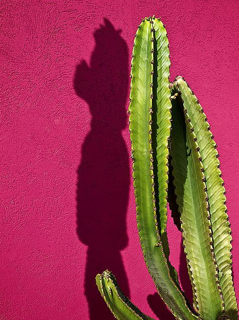 wow! the bright green cactus with a big pop of pink! We're feeling pinspired