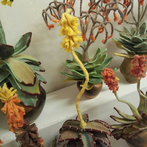 Aloes 2014