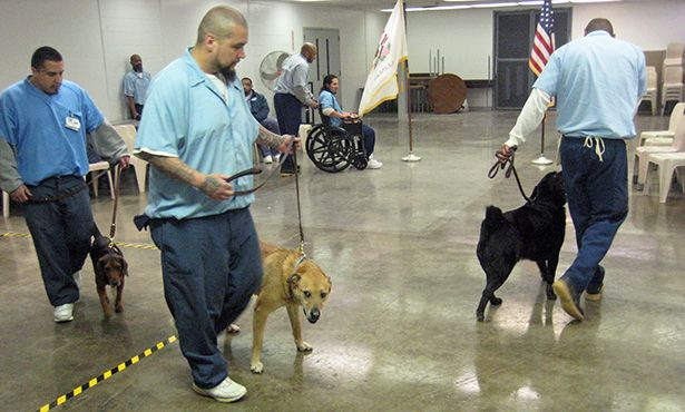 Inmates Shelter Dogs Get Second Chance Benefit Veterans