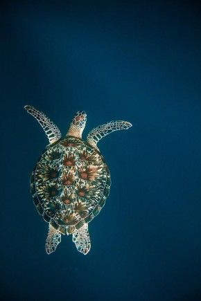 Snorkeling with Sea Turtles on Gili Trawangan | Travel & Underwater Photography by Tommy Schultz