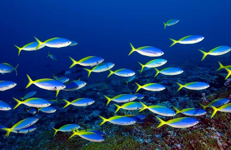 A school of colorful fish fish travel in schools so they for Little fish swim school