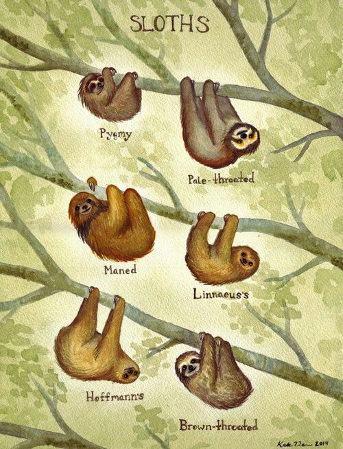 Types of Sloths                                                                                                                                                      More