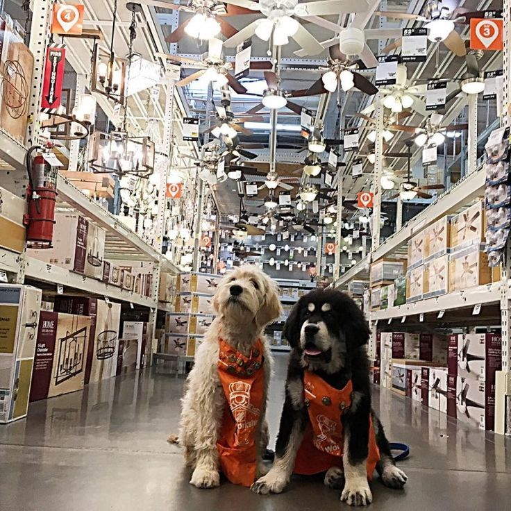 17 Best Ideas About Home Depot On Pinterest