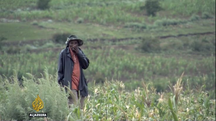 AlJazeera clip about harvest situation in Leribe District