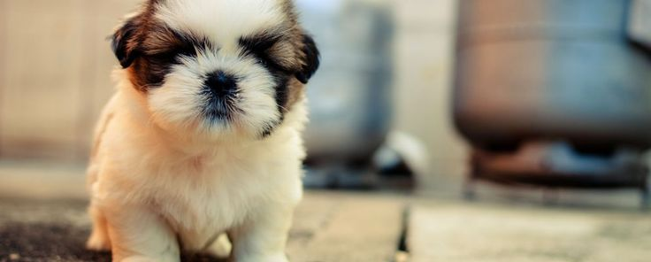 For the Love of Dog: 5 Best Places for Cute Puppy Photos and Videos #Internet #Social_Media #Cool_Web_Apps #music #headphones #headphones