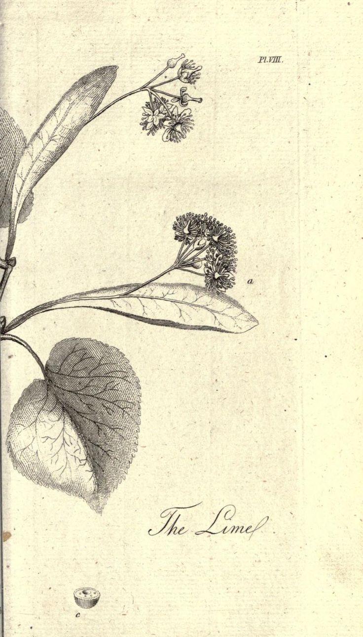 847 best images about printables on pinterest vintage for Botanical tattoo london