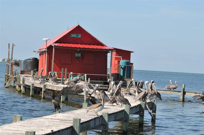 47 best cape coral ft myers fl images on pinterest for Fish house fort myers beach