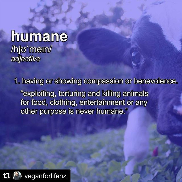"""#Repost @veganforlifenz with @repostapp ・・・ A lot of people nowadays seem to be confused as to the meaning of the word """"humane"""". To clarify, """"humane"""" is often defined as """"having or showing compassion or benevolence."""" A few examples of how you can use the word """"humane"""" in a sentence: Hurting, terrorizing & killing sheep because you want wool mittens is NOT humane. Separating a cow from her calf (and, eventually, slaughtering both of them) because you want cheese is NOT humane. ..."""
