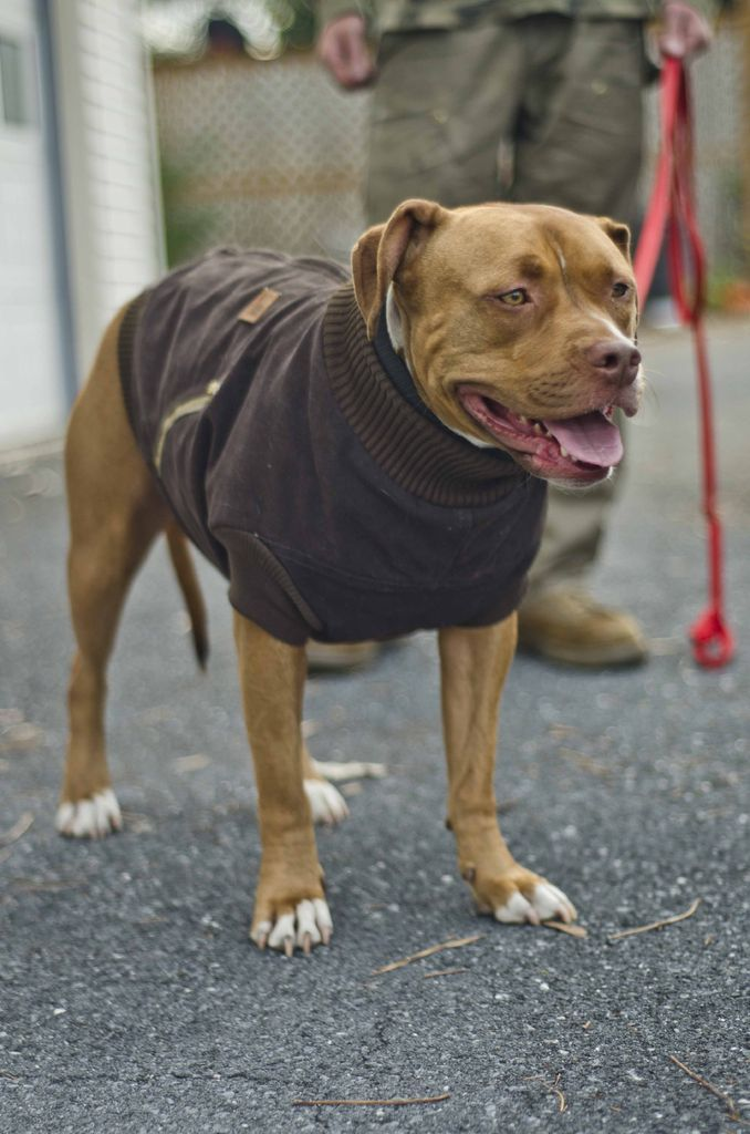 DIY with awesome step-by-step. fantastic fitted jacket for large dog out of sweater or coat