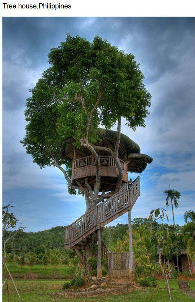 Tree house, Philippines Cool tree houses, Tree house