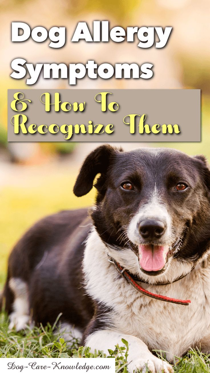 Dog Allergy Symptoms And How To Recognize Them Dog Allergy