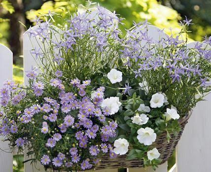Die Pflanzidee zeigt: Um einen effektvollen Balkonkasten zu bepflanzen, braucht man nicht viele Pflanzen.