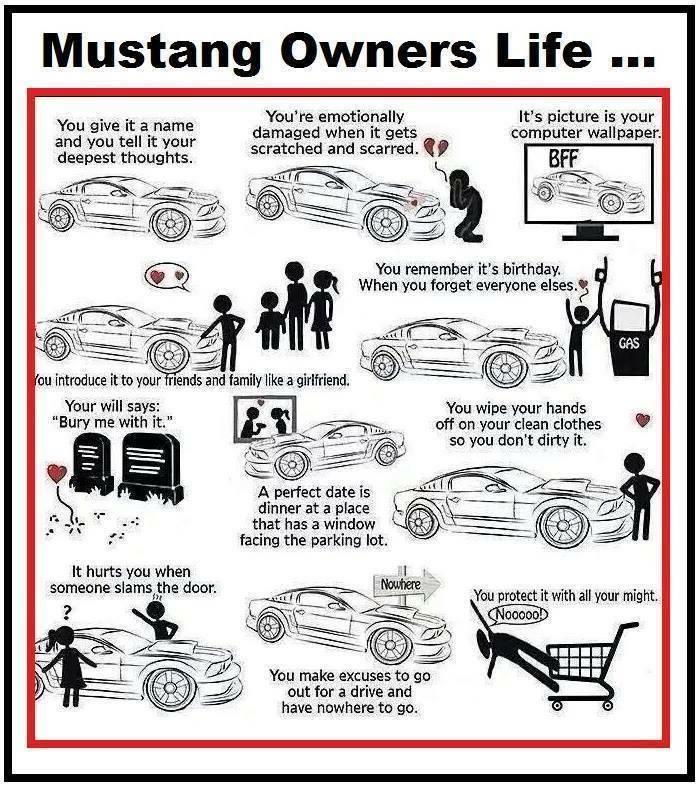 """""""@MustangGailRose: Mustang owners """" So true. #becausemustang (Ford Mustang Humor)"""