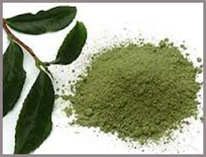 Perfect Living  Does Green Tea Extract Really Burn Fat?