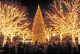 Christmas in Boston - Official Christmas Tree Lighting Ceremony - Boston Holidays
