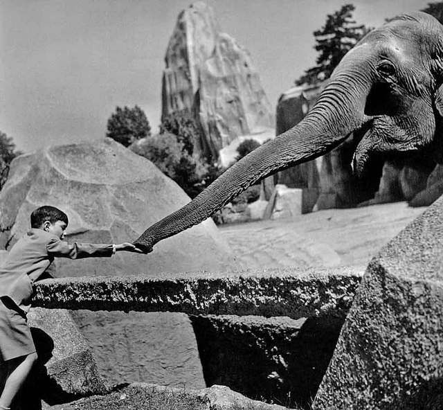 Robert Doisneau // Paris - Zoo de Vincennes - 1949. ( http://www.gettyimages.co.uk/detail/news-photo/an-elephant-is-eating-in-the-hand-of-a-young-boy-at-the-zoo-news-photo/452148904