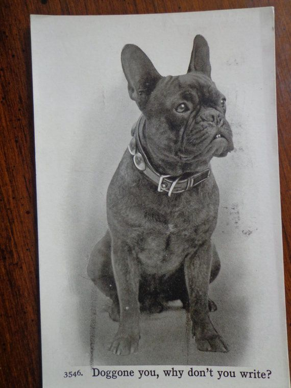 Antique French Bulldog postcard postmarked 1911 by PUGHALLVINTAGE, $7.00 SOLD!