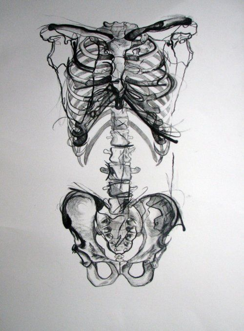 i have grown a love for the human body because of my anatomy & physiology class. the axial skeleton is one of my favorites.