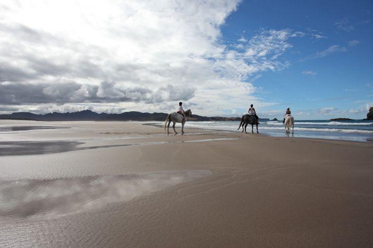 Horse Treks, Great Barrier Island, Hauraki Gulf, New Zealand