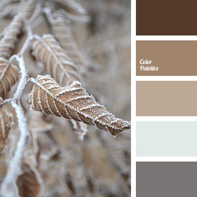 beige, color combination, color matching, color solution, colors of fall 2016, dark brown, fall colors, fur color, gray, gray-brown, pale gray, reddish brown, shades of autumn, shades of brown, tea color.