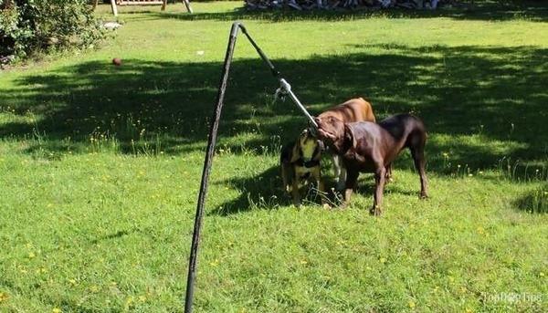 Big Tether Tug 70 Lb Interactive Dog Toys Best Dog Toys