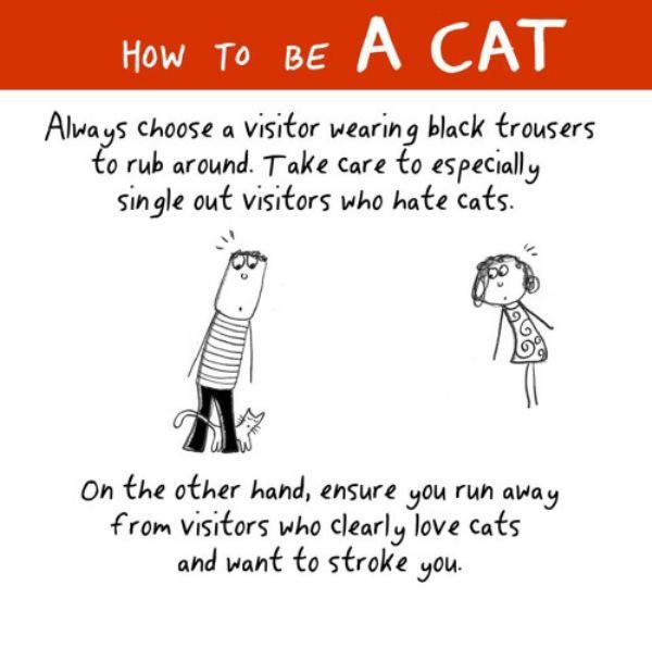 How to be a cat (12 photos)