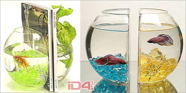 Contemporary Small Aquarium Tanks for Home Decoration