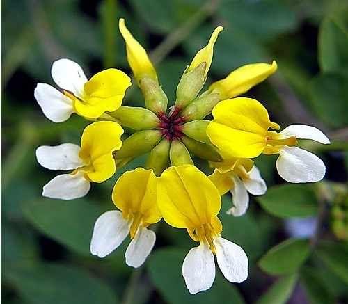 17 best images about fleurs rares on pinterest autumn
