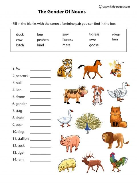 Kids Pages Nouns Gender Animals
