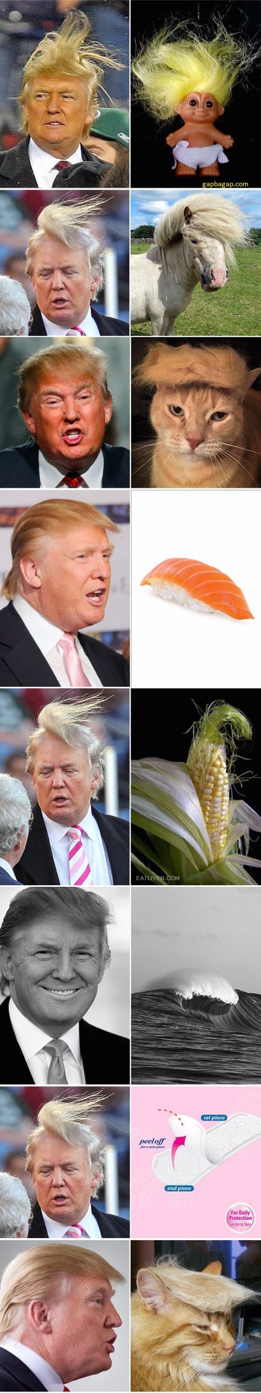 Funny Pictures Of Donald Trump's Hair Style