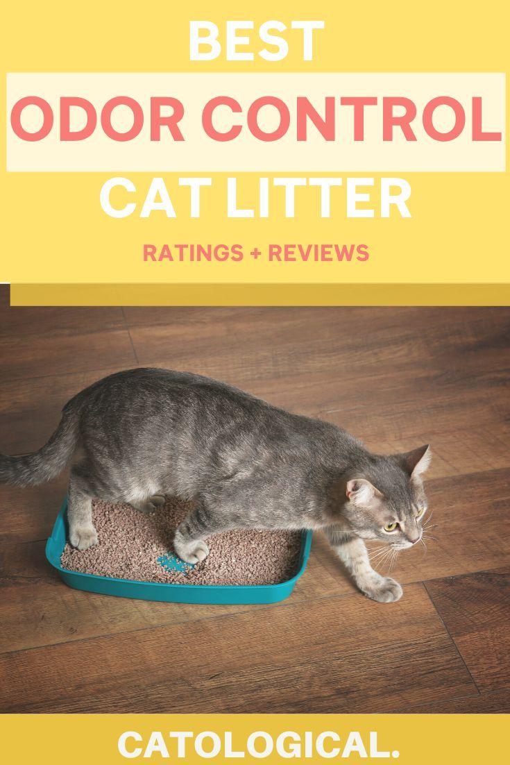 Reviewing The Best Odor Controlling Litter Boxes No More Cat Pee Smell Best Cat Litter Cat Litter Cat Litter Odor