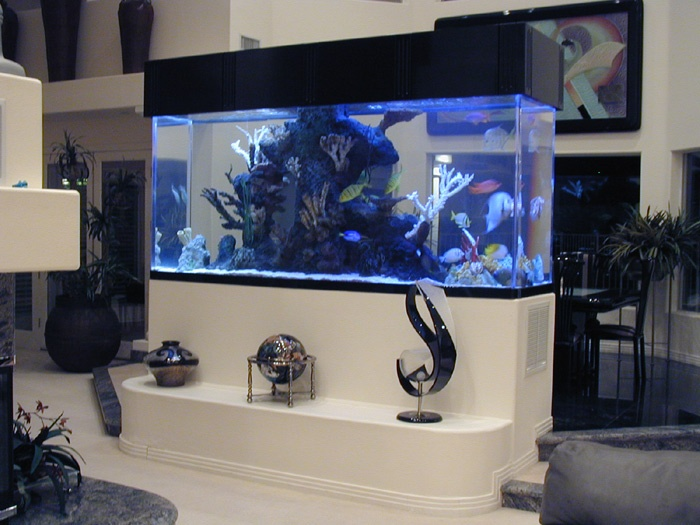 I WILL have an amazing salt water fish tank in a wall in my home.. so i can see the beautiful fish from both sides :)