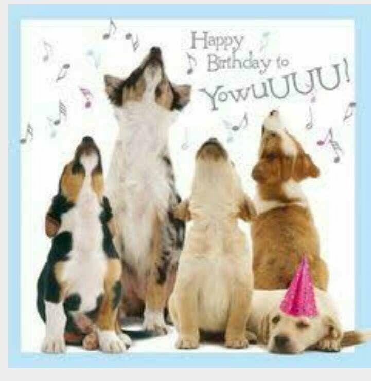 Geburtstagsspruche Hundebesitzer Geburtstagsspruchehundebesitzer Happy Birthday Puppy Happy Birthday Cousin Happy Birthday Dog