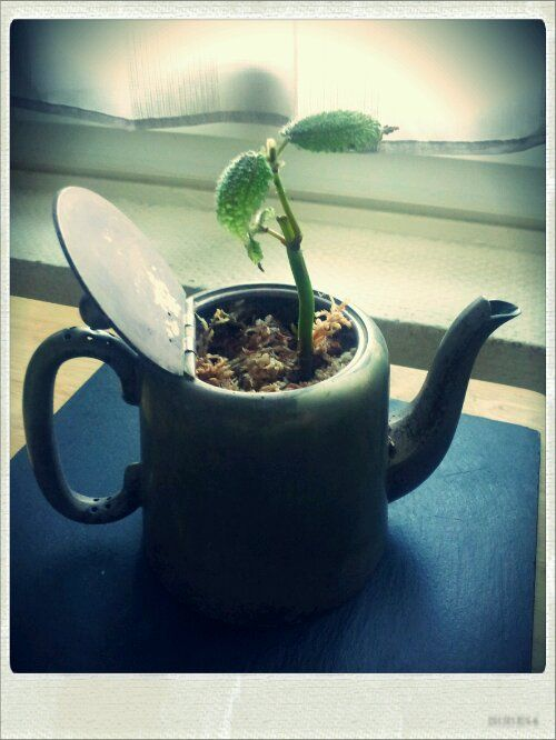 garden & plant diy