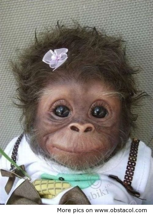 I nearly choked when I saw this!  It's so cute it's funny!! Happy Funny Friday. greenorchidmassage.com