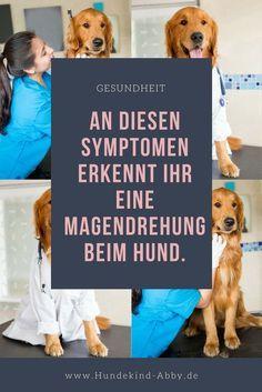 #Magendrehung #hund #Hunde #Hundeliebe #Gesundheit #Hundgesund #Hundeblog #Hundeblogger #Hundefutter #Ernährung