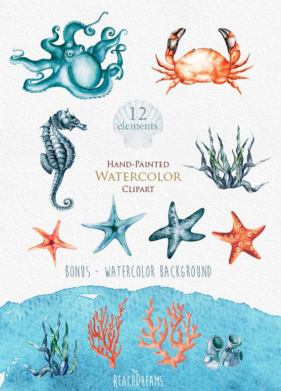 Nautical watercolor clipart. Marine. Ocean. Individual PNG elements. Crab…