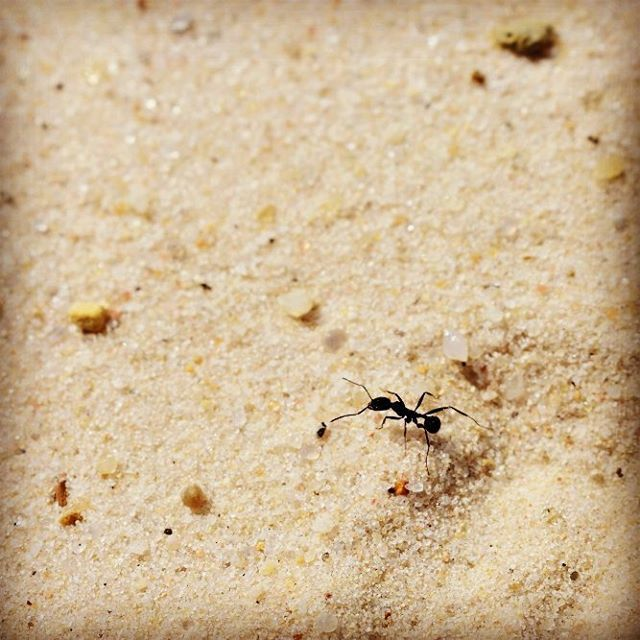 This ant is part of my Path of the Ant duo. I enjoyed watching this ant move around over the landscape. This area it traversed was so small to me, but so big to him.