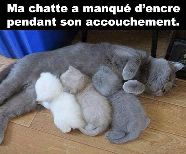 My cat had an ink shortage during her delivery.... http://www.frenchtoday.com/